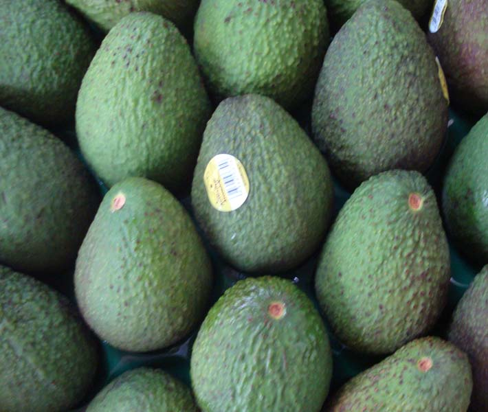 Other products | Australia | Fruits | Avocado Hass | Theodore