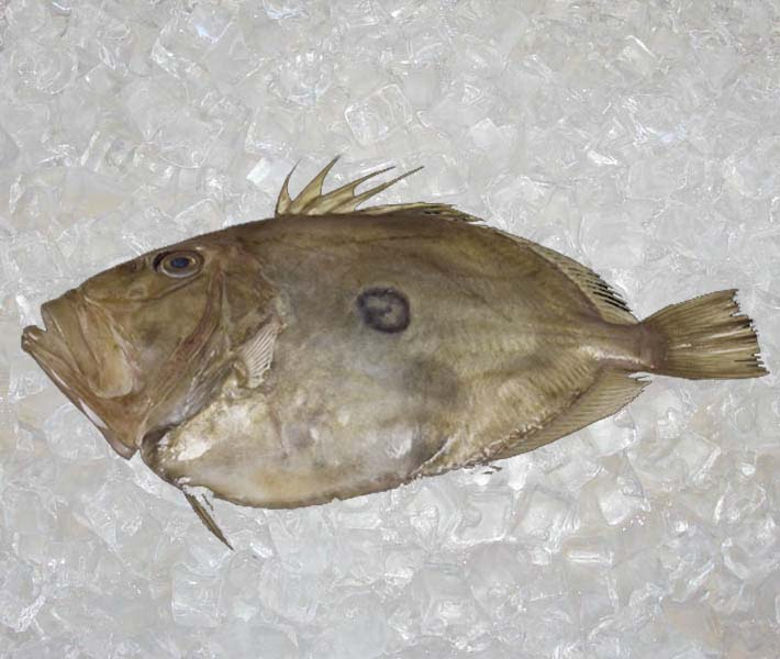 Seafood new zealand shell fish theodore for Opah fish price