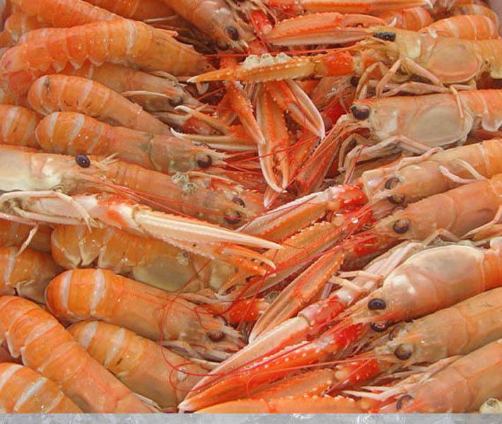 Seafood | Malaysia | Shell Fish | Langoustine - frozen | Theodore