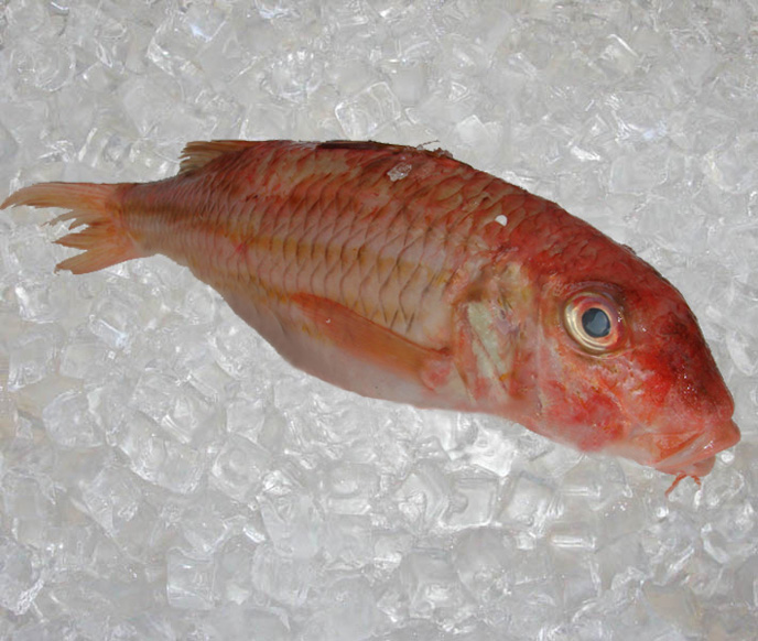 Seafood france round fish red mullet theodore for Red mullet fish