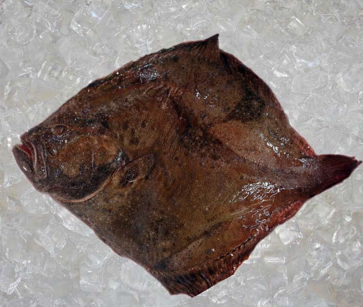 Seafood france flat fish turbot theodore for Turbot fish price