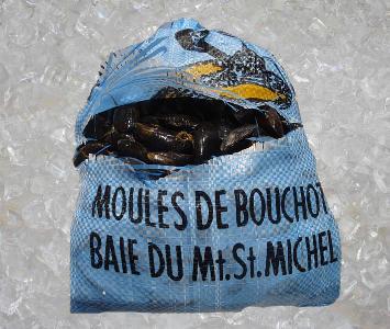Blue Mussel / Moule Bouchot