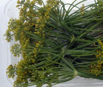 Fenell Flower