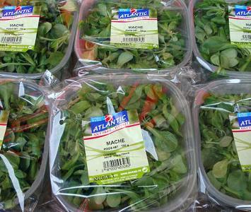 Marche / Corn Salad
