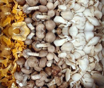 Mixed Mushrooms