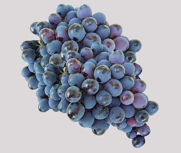 Muscat Black Grape