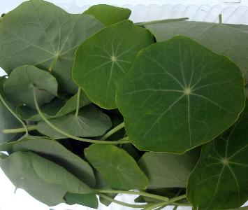 Nastarium Leaves