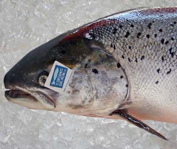 Salmon Organic