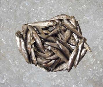 Whitebait / Friture